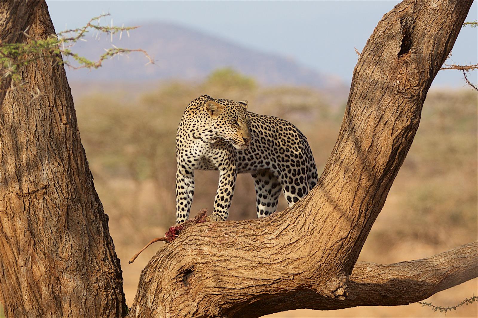 Rejseguide til safari
