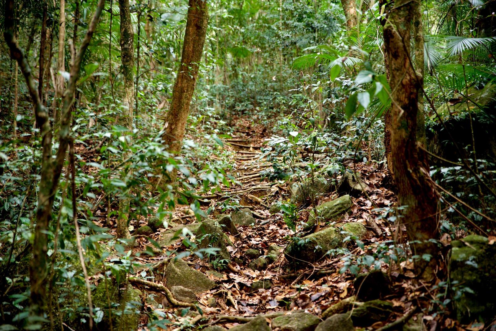 Jungletrek Ilha Grande