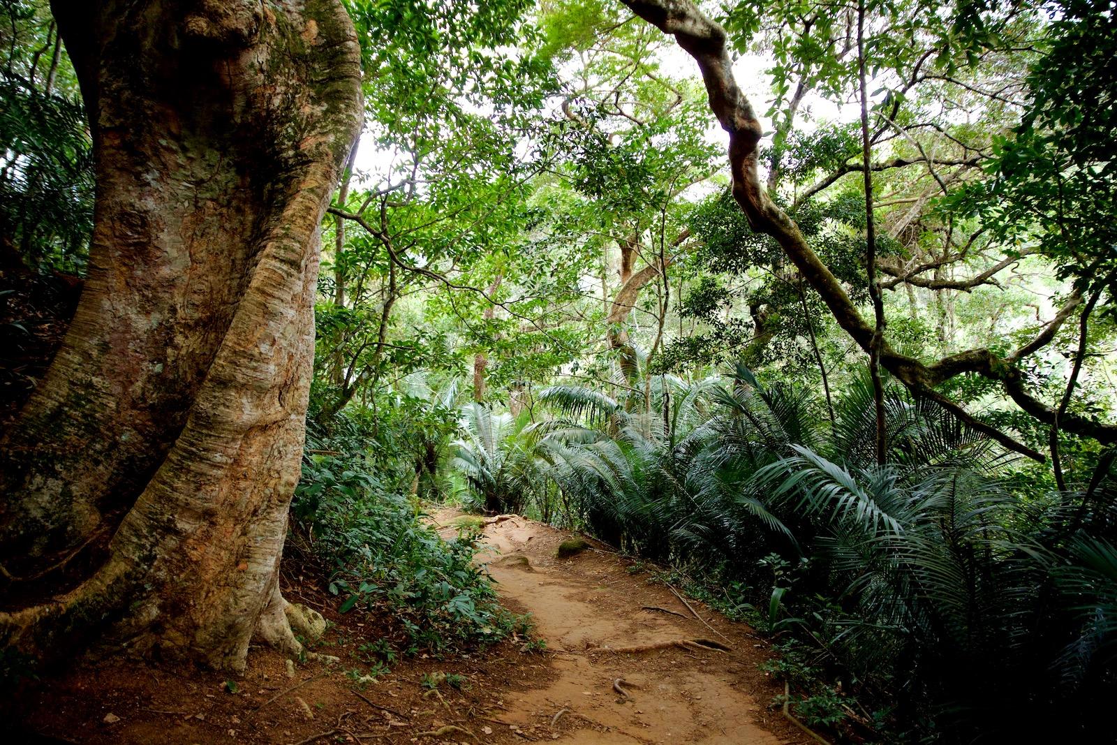 Junglestier Ilha Grande