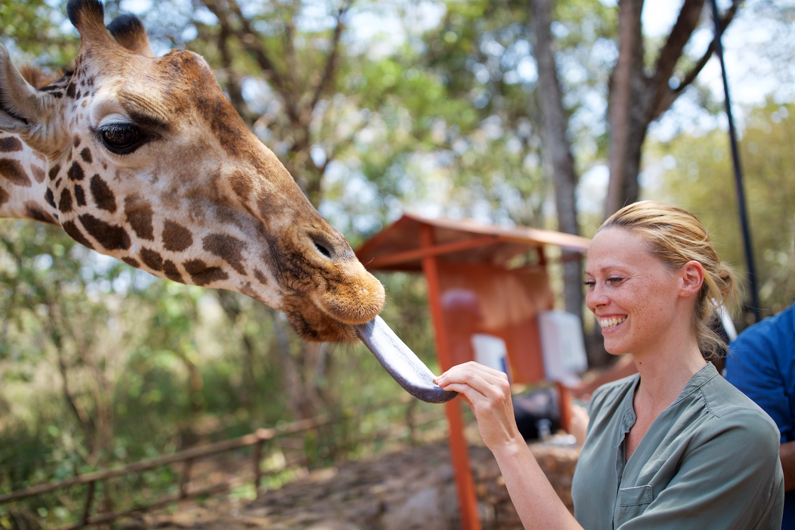Giraf i Nairobi