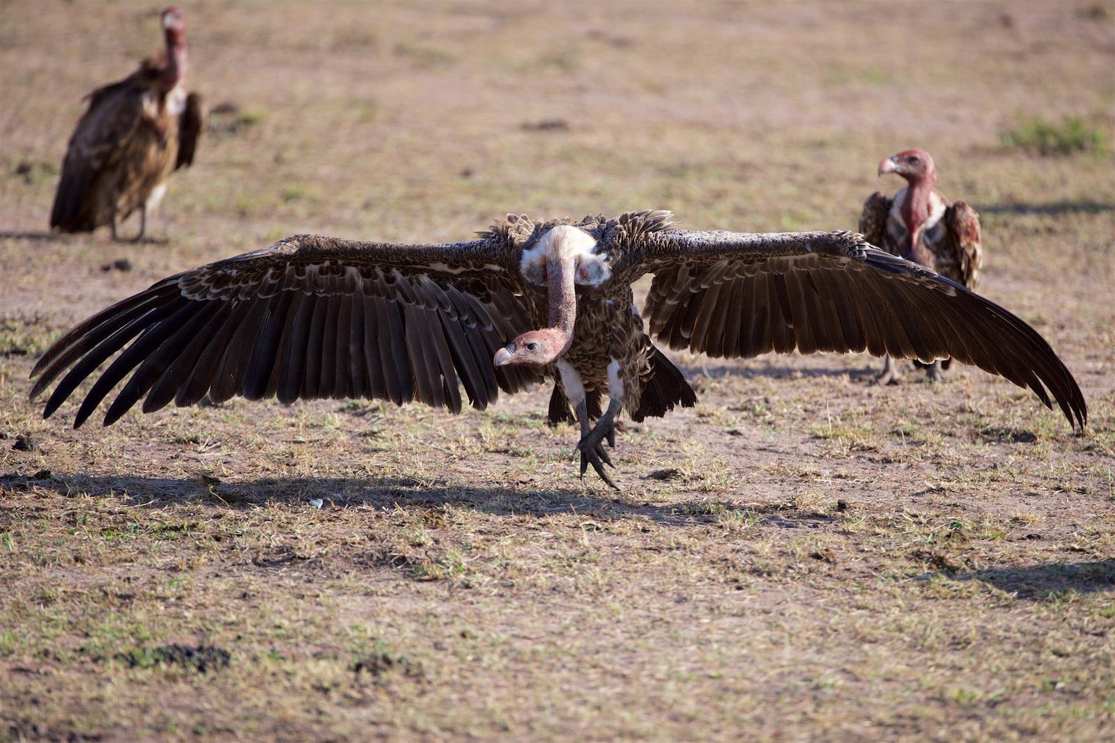 Grib i Kenya Afrika