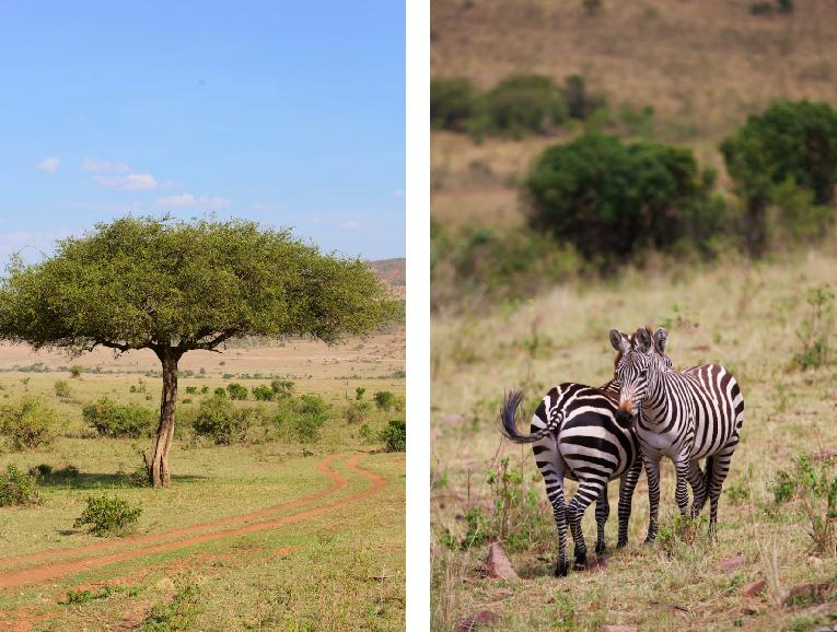 Safari i Kenya Afrika