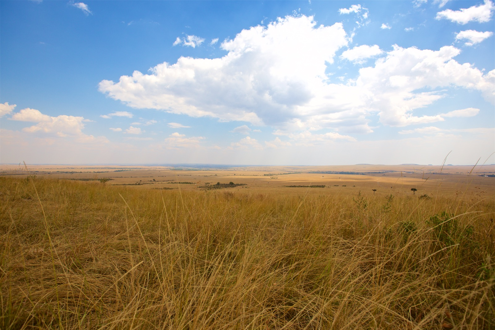 Safari udsigt Masai Mara Kenya