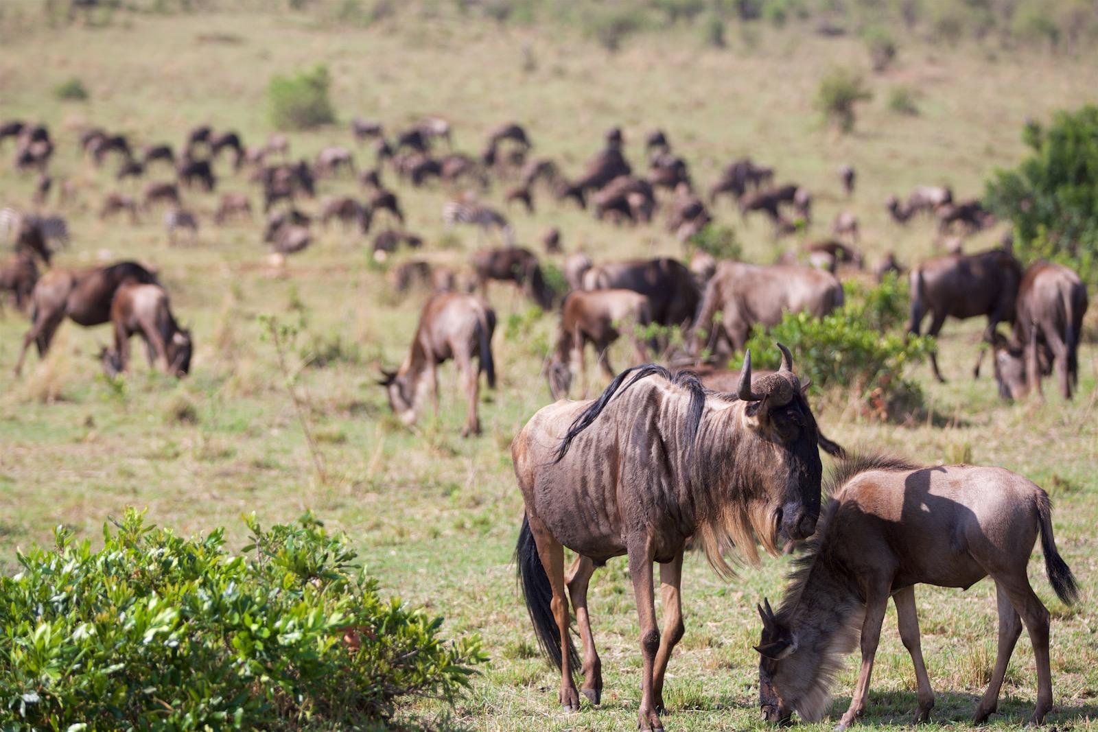 Rejseblog Afrika