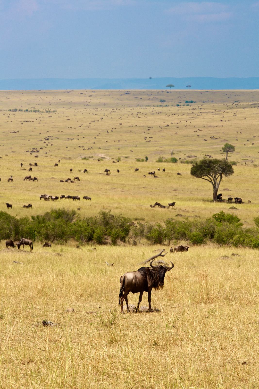 Rejseblog safari i Kenya