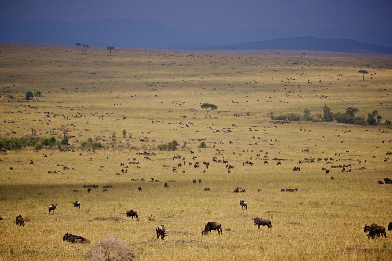 Savanne Masai Mara Kenya