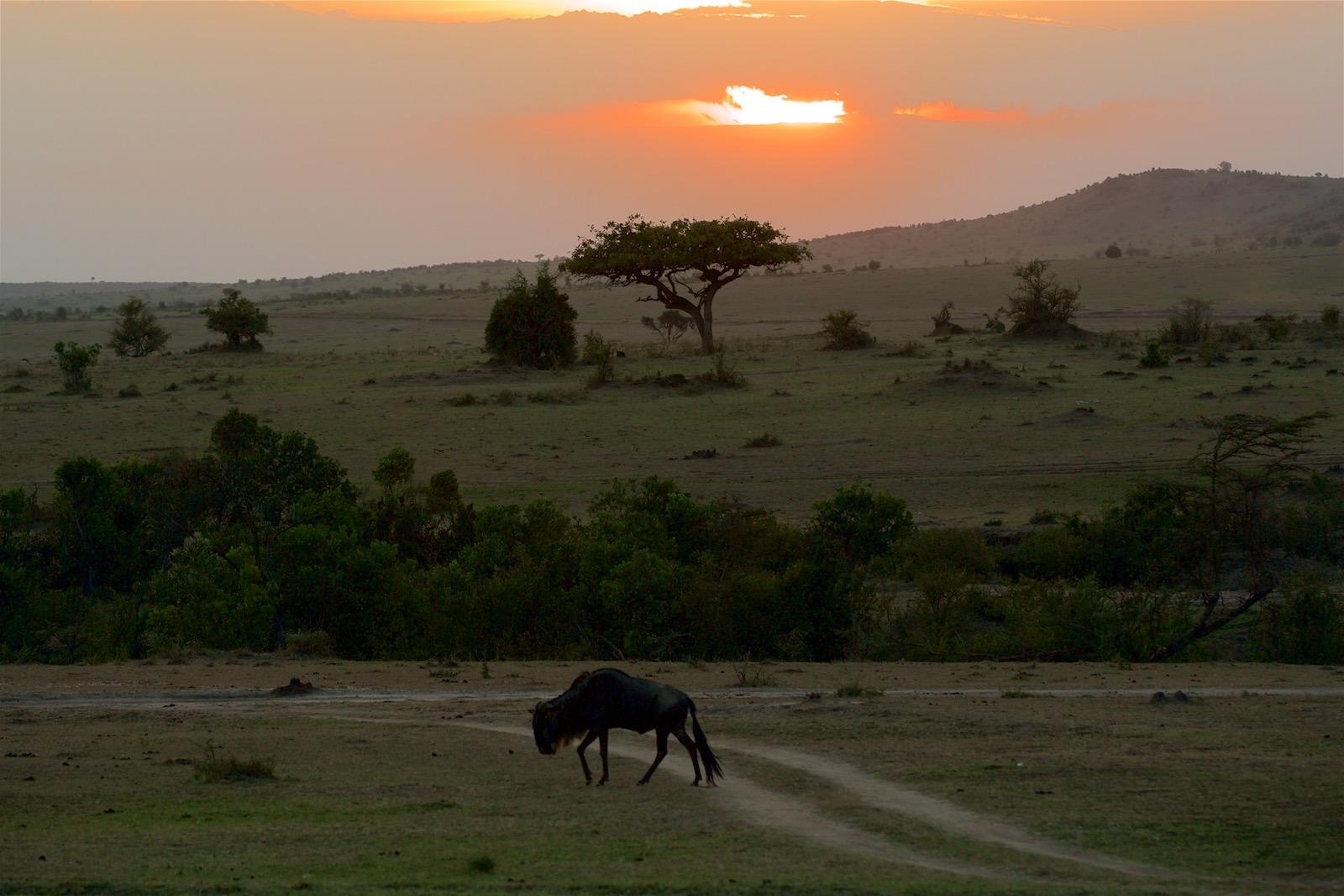 Solnedgang savanne Kenya